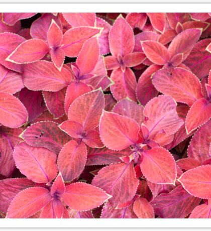 Decorative red plants Sticker