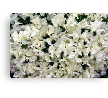 White Sweet Pea Design for T-shirt or other Products Canvas Print