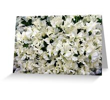 White Sweet Pea Design for T-shirt or other Products Greeting Card