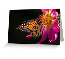 Monarch sipping dahlia nectar Greeting Card