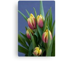red and yellow tulips in spring blue background Canvas Print