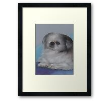 "Old one-eyed ""Bandit"" in pastels Framed Print"