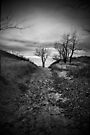 The Path by PhotosByHealy