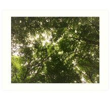 Tree Canopy Art Print