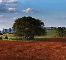 Red soil Dorrigo - waiting for rain by Clare Colins