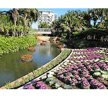 Water Feature & Kale flower bed, Colin Campbells Mem. Gdn. Brisbane. Qld. Photographic Print