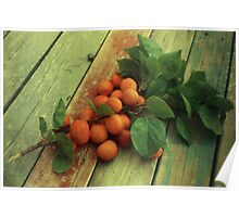 Armenian Plums at Home Poster