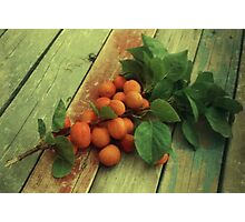 Armenian Plums at Home Photographic Print