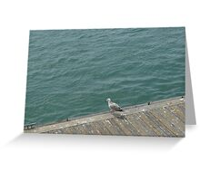 Seaside Sea Gull Greeting Card