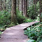 Fern Canyon by jedesigns