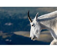 Rocky Mountain Unicorn Photographic Print