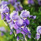 Garden Scene-900756 by Michael Byerley