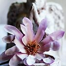 Magnolia And Angel by Evita