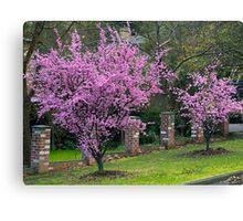 Spring Blossom, Flowering Almond Trees, Berwick, Australia. Canvas Print