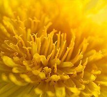 Sunny Celebration by Belinda Osgood