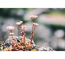 Little Red Flowers Photographic Print