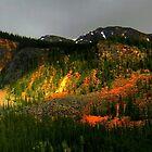 The Hills.......Alberta, Canada by Elfriede Fulda