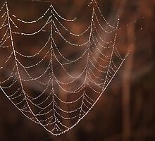 Spider web dew drops,  Macro photography, Nature by SammyPhoto