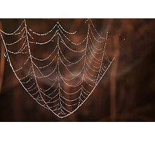 Spider web dew drops,  Macro photography, Nature Photographic Print