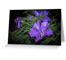 Purple Hibiscus flowers Leith Park Victoria 20160603 7077  Greeting Card