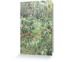 Peach Trees Greeting Card