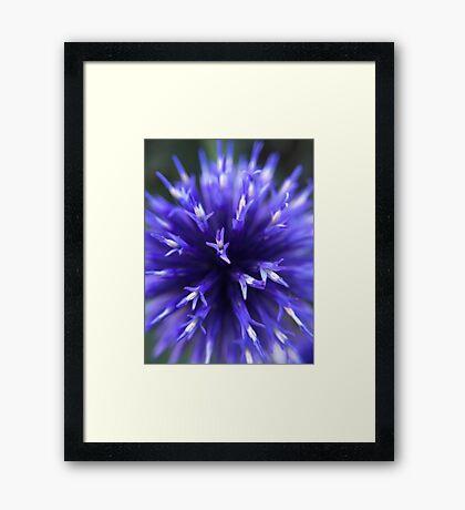 Round, Blue Flower Framed Print