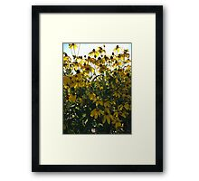 Backlit Yellow Flowers Framed Print