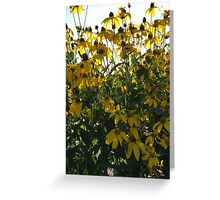 Backlit Yellow Flowers Greeting Card