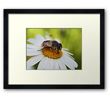 Daisy Worker Framed Print