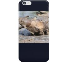 Warthog - African Wildlife Background - Healing Mud Bath iPhone Case/Skin