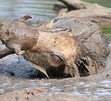 Warthog - African Wildlife Background - Healing Mud Bath by LivingWild