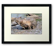Warthog - African Wildlife Background - Healing Mud Bath Framed Print