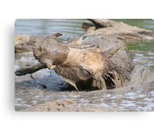 Warthog - African Wildlife Background - Healing Mud Bath Canvas Print