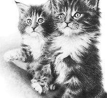 Meine Coon Kittens by artddicted