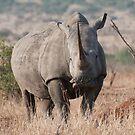 White Rhino by Vickie Burt