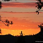 Sierra Sunset by Tracy Freese