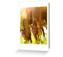 Two horses grazing at sunset Greeting Card