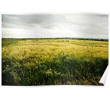 The barley field Poster
