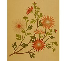 Vintage Pink and Red Wildflower Design Photographic Print