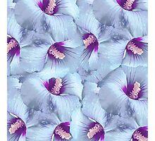 Poppy Flowers Pattern Photographic Print