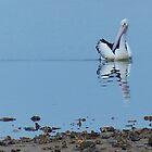Australian Pelican by watchthebirdie