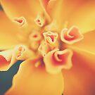 Spirals by Katayoonphotos