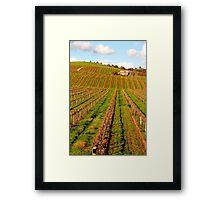 Vineyard in the Barossa Valley Framed Print