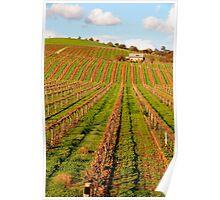 Vineyard in the Barossa Valley Poster