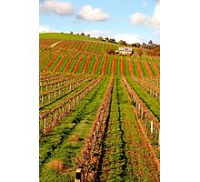 Vineyard in the Barossa Valley Photographic Print
