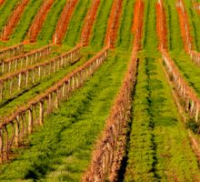 Vineyard in the Barossa Valley Sticker