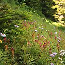 Flowery mountain side by zumi