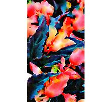 Red Flowers Black Leaves Photographic Print