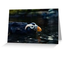 Puffin Around  Greeting Card