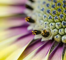 Look Closer by Sandra Parlow
